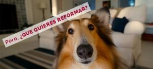 que quieres reformar